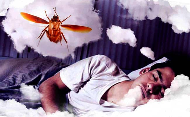 What does it mean to dream about cockroaches