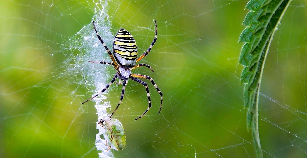 What does it mean to dream about spiders