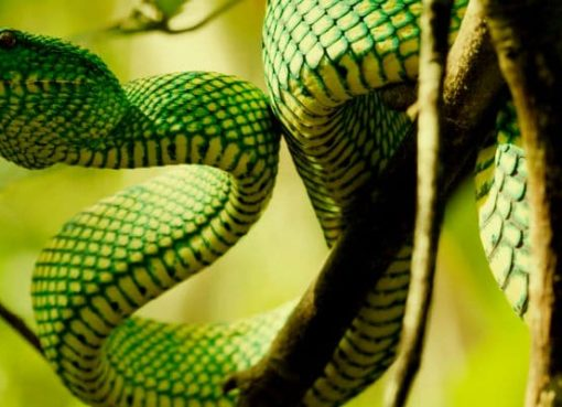 What does it mean to dream of a snake