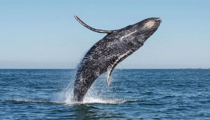 What does it mean to dream of a whale