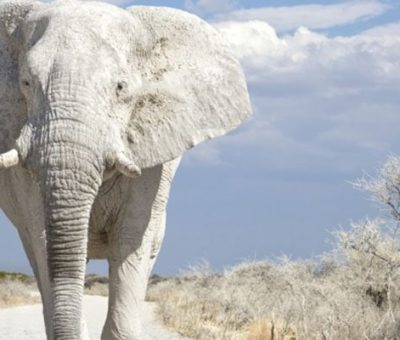 What does it mean to dream of an elephant