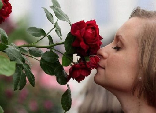 What does it mean to dream of roses