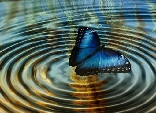 What it means to dream about butterflies