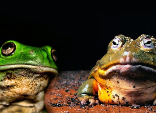 What it means to dream of toads or frogs