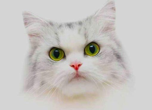 dream of cats