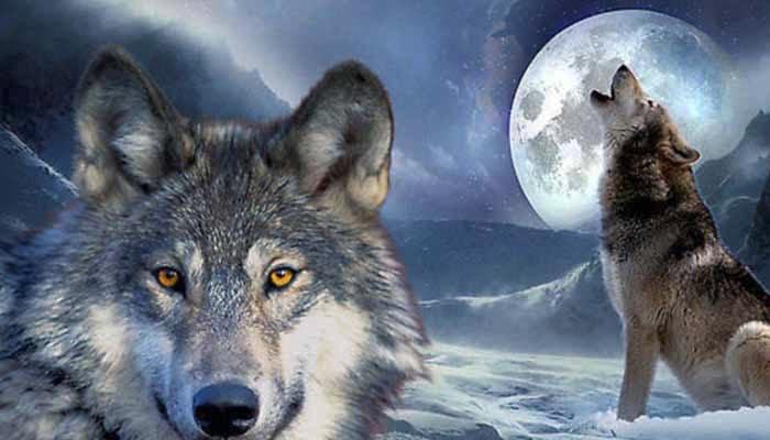 dream of wolves