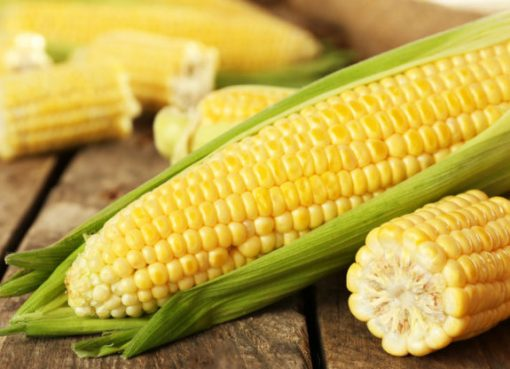 Corn: History, Cultivation, Varieties, Uses and Characteristics
