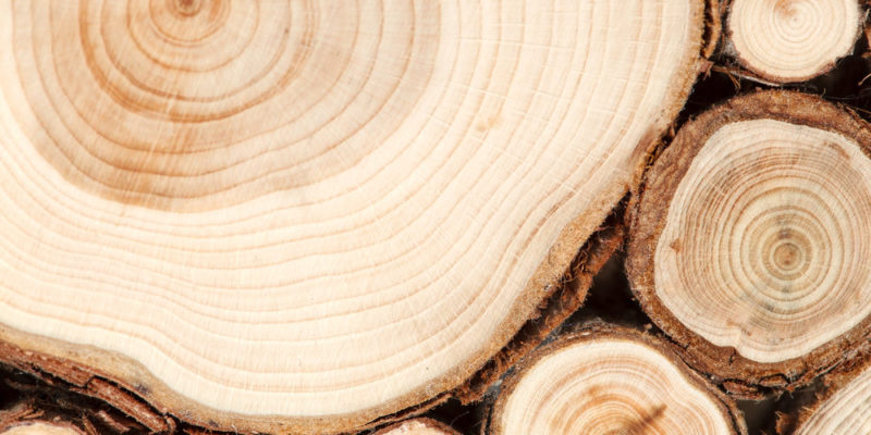 Wood: Composition, Structure, Uses and Characteristics